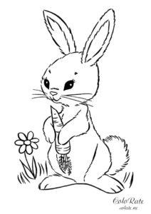 Красивая молодая крольчиха с морковью - раскраска для детей распечатать