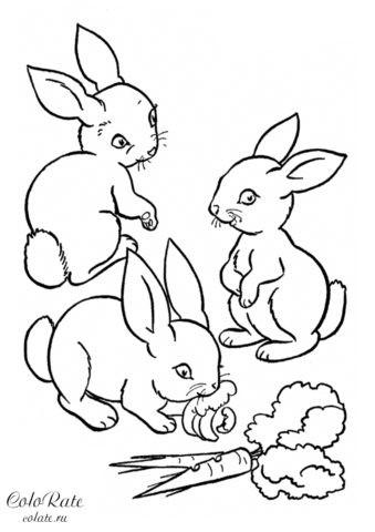 Обед в семье кроликов - раскраска для печати на листах А4