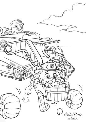 Маршал и Крепыш убирают яблоки бесплатная разукрашка