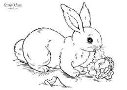 Реалистичный кролик - распечатать разукрашку