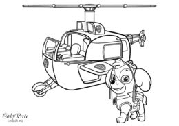 Скачать и распечатать разукрашку - Скай с вертолетом - Щенячий патруль