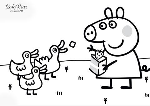 Свинка Пеппа кормит уточек - скачать и распечатать разукрашку для детей