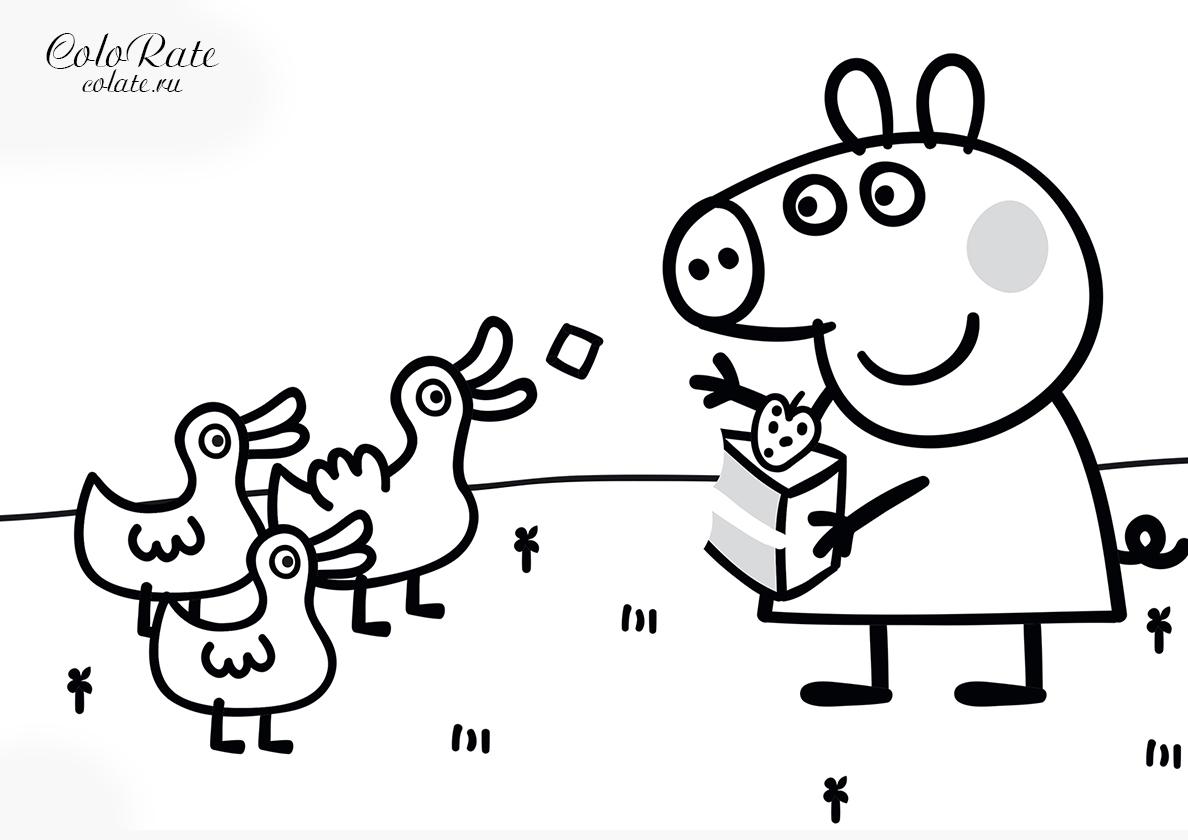 Раскраска Свинка Пеппа кормит уточек распечатать | Свинка ...