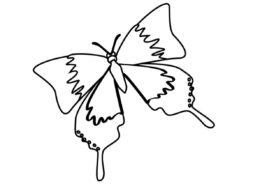 Весна бесплатная раскраска - Бабочка