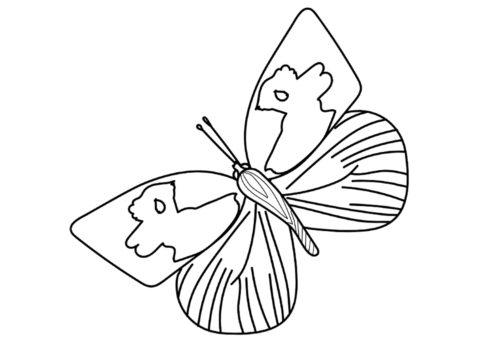 Бабочка Zerene cesonia (Бабочки) распечатать бесплатную раскраску