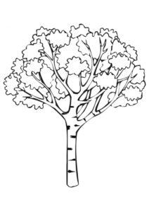 Белая береза - Осень распечатать раскраску на А4