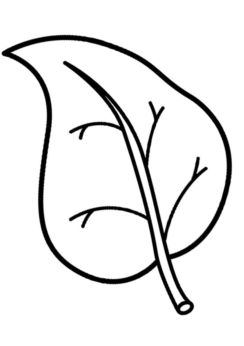 Раскраска Березовый листок распечатать | Листья