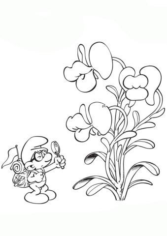 Благоразумник изучает цветок бесплатная раскраска - Смурфики