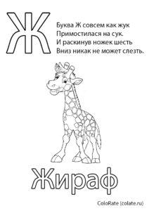 Буквы и алфавит бесплатная раскраска распечатать на А4 - Буква Ж - Жираф