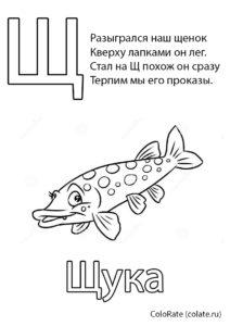 Буква Щ - Щука (Буквы и алфавит) раскраска для печати и загрузки