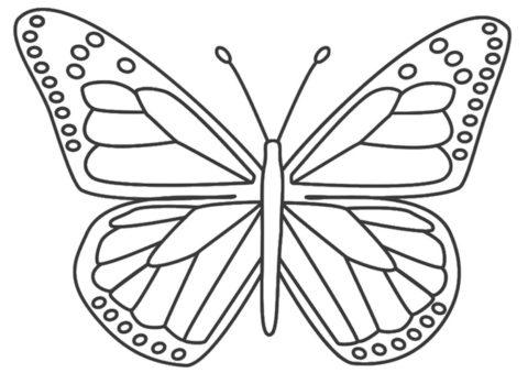 Раскраска Данаида монарх распечатать на А4 и скачать - Бабочки