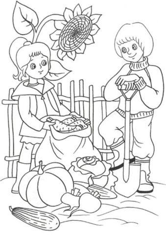 Раскраска Дети собирают урожай распечатать | Лето