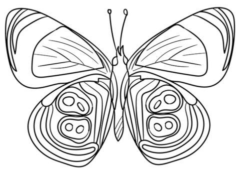 Разукрашка Диаефриа распечатать на А4 и скачать - Бабочки