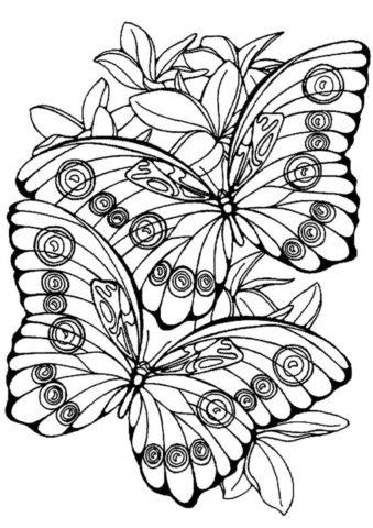 Две бабочки распечатать и скачать раскраску