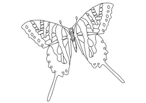 Евритида марцелл раскраска распечатать и скачать - Бабочки