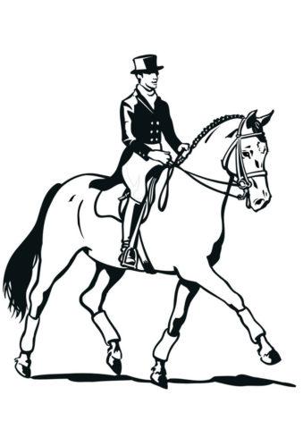 Лошади и пони бесплатная раскраска распечатать на А4 - Интеллигентный наездник верхом