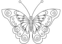 Раскраска Изысканные крылья бабочки распечатать на А4