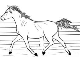 Жеребец в загоне (Лошади и пони) бесплатная раскраска на печать