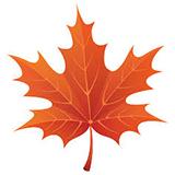 Раскраски листьев деревьев