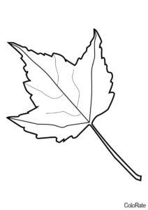 Кленовый лист - Трафареты листьев трафарет распечатать на А4