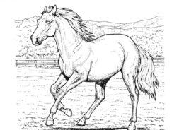 Лошади и пони бесплатная раскраска - Конь в движении