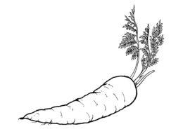 Королева осени распечатать разукрашку бесплатно - Морковь