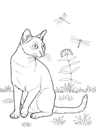 Бесплатная раскраска Кошка и стрекозы распечатать и скачать - Коты, кошки, котята