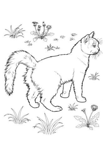 Кошка на прогулке - Коты, кошки, котята раскраска распечатать на А4