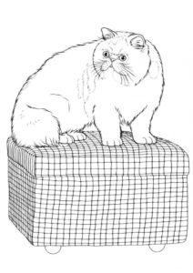 Коты, кошки, котята распечатать раскраску на А4 - Кот на чемодане