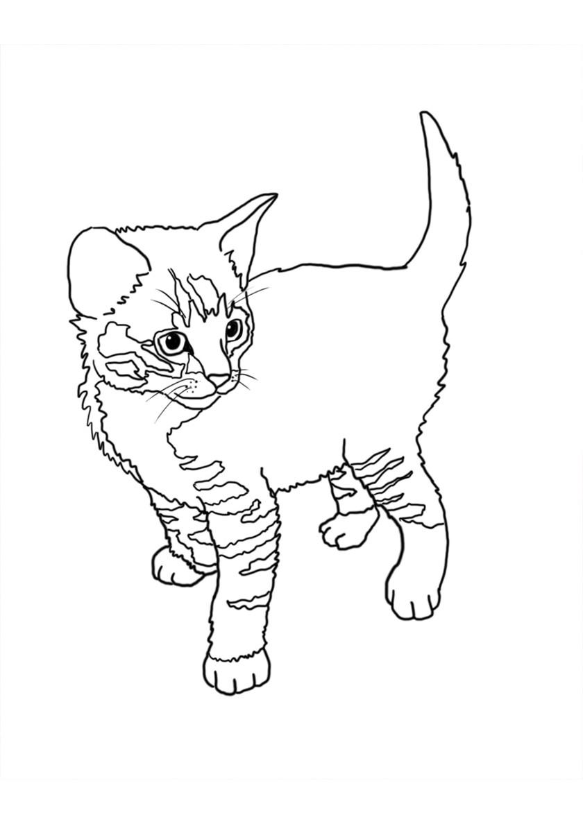 Раскраска Котик смотрит распечатать | Коты, кошки, котята
