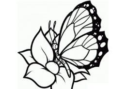 Бабочки бесплатная раскраска распечатать на А4 - Красавица на цветке