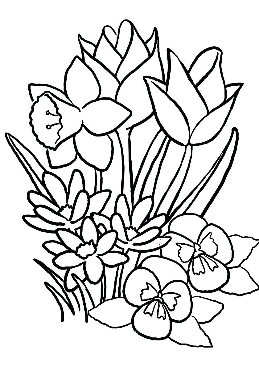 Раскраска Красивые цветы распечатать | Весна