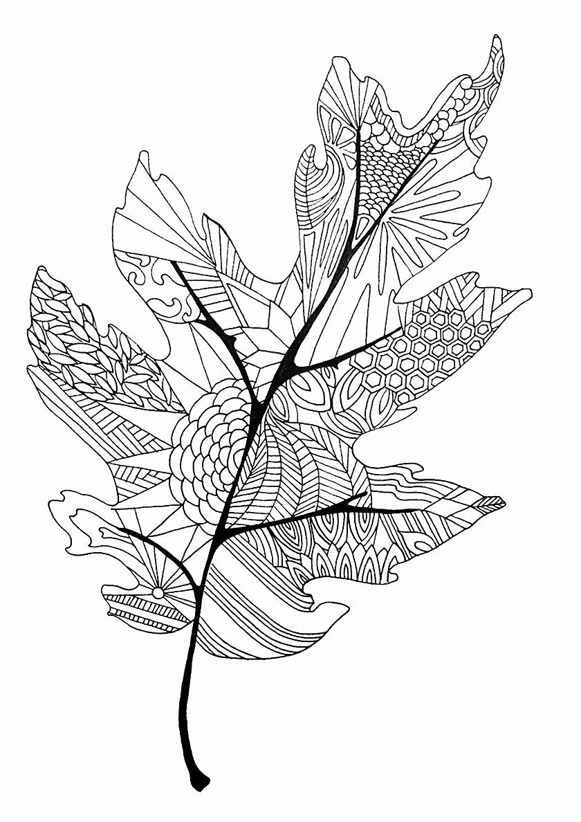 Раскраска Красивый дубовый листочек распечатать | Листья