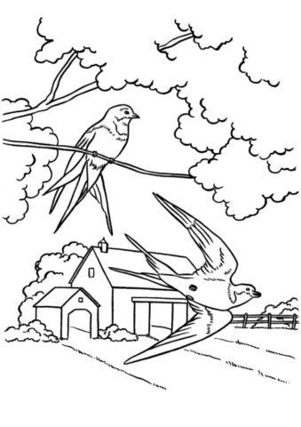 Бесплатная разукрашка для печати и скачивания Ласточки - Весна