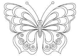 Раскраска Лесная красавица распечатать и скачать - Бабочки