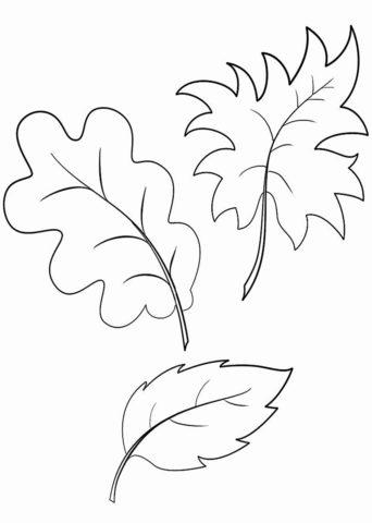 Листик дуба, клена и бука (Листья) распечатать разукрашку