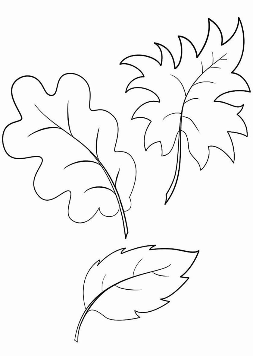 Раскраска Листик дуба, клена и бука распечатать | Листья