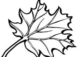 Листья распечатать раскраску - Листочек кленовый