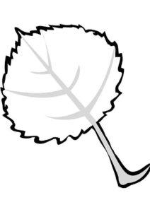 Бесплатная раскраска Листочек липы распечатать и скачать - Листья