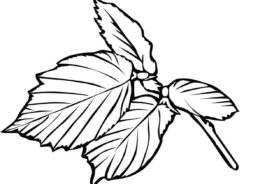 Листья распечатать раскраску на А4 - Листочки березы