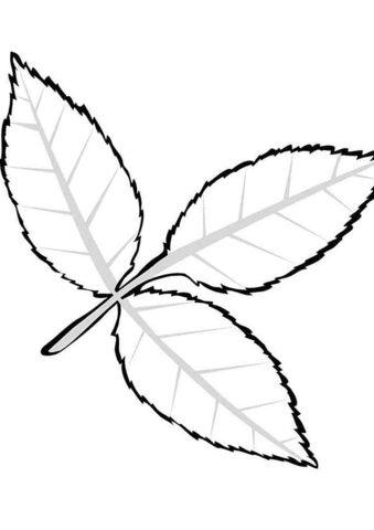 Бесплатная разукрашка для печати и скачивания Листок листопадного дерева ясеня - Листья