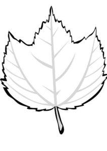 Раскраска Листок лиственного дерева - Листья