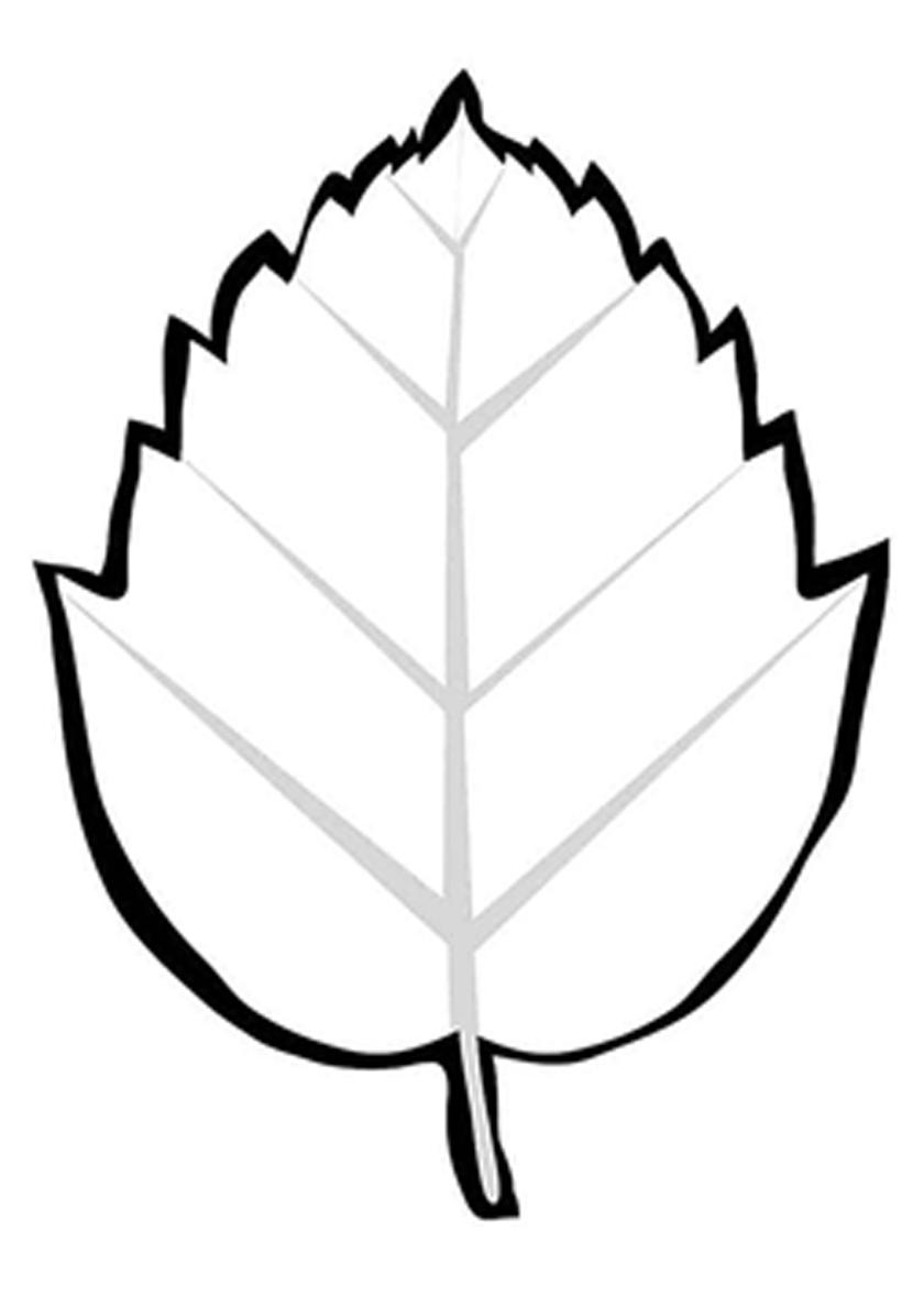 Раскраска Листок пышного дерева граб распечатать | Листья