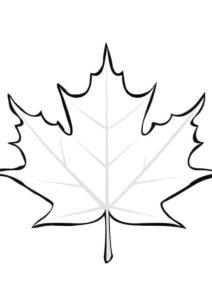 Листок золотого клена (Листья) раскраска для печати и загрузки