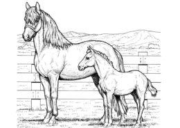 Лошадь с жеребенком (Лошади и пони) распечатать раскраску