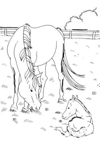 Бесплатная раскраска Лошадь с ребенком - Лошади и пони