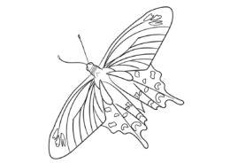 Раскраска Малиновая роза распечатать на А4 - Бабочки