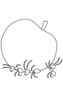 Муравьи несут яблоко (Яблоко) распечатать разукрашку