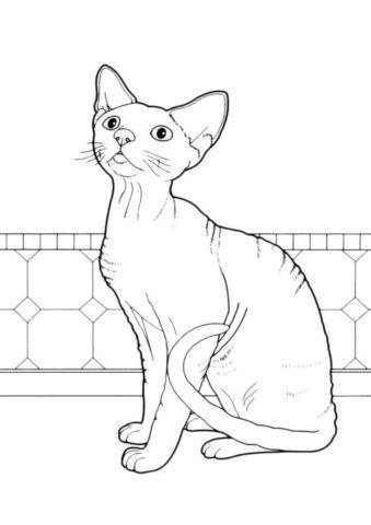 Наблюдающий сфинкс - Коты, кошки, котята раскраска распечатать на А4