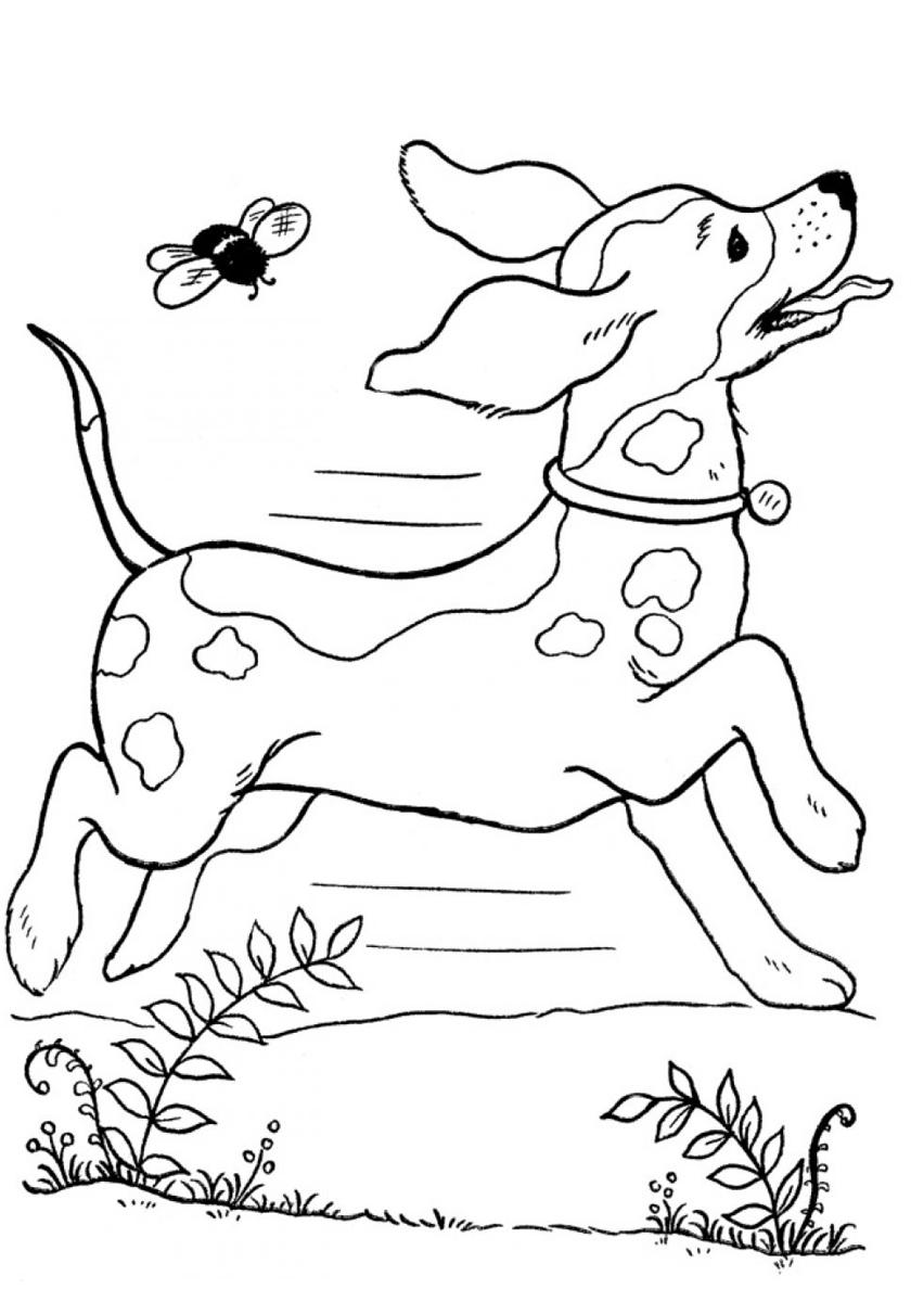 Раскраска Охотничья собака убегает от шмеля распечатать ...